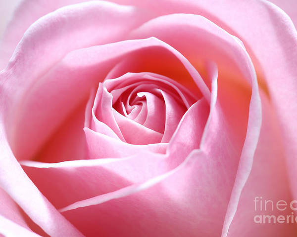 Pink Poster featuring the photograph Pink Rose by LHJB Photography