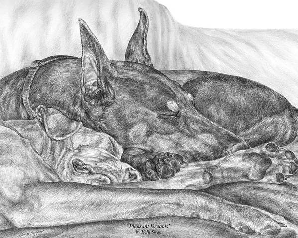 Doberman Poster featuring the drawing Pleasant Dreams - Doberman Pinscher Dog Art Print by Kelli Swan