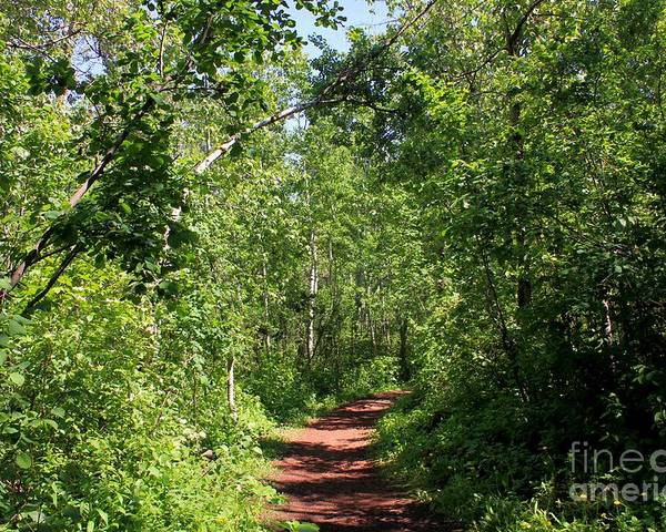 Trees Poster featuring the photograph Pleasant Trail by Jim Sauchyn