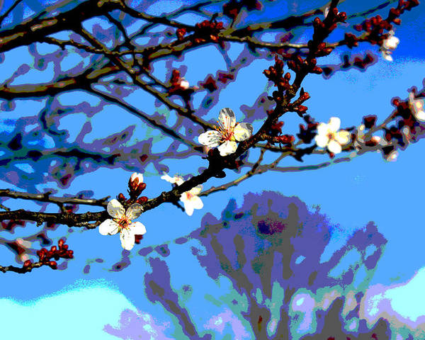 Flower Poster featuring the photograph Plum Tree Blossom by Bob Whitt