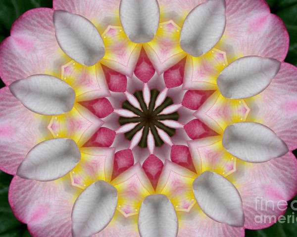 Kaleidoscope Poster featuring the photograph Plumeria 3 by Mark Gilman