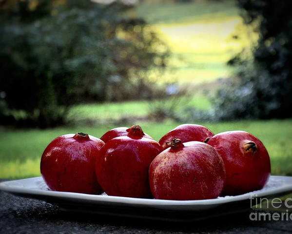 Nature Poster featuring the photograph Pomegranates On White Platter 3 by Tanya Searcy
