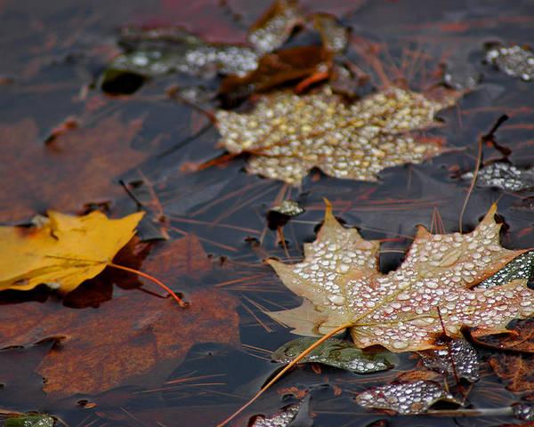 Usa Poster featuring the photograph Pond Leaf Dew Drops by LeeAnn McLaneGoetz McLaneGoetzStudioLLCcom