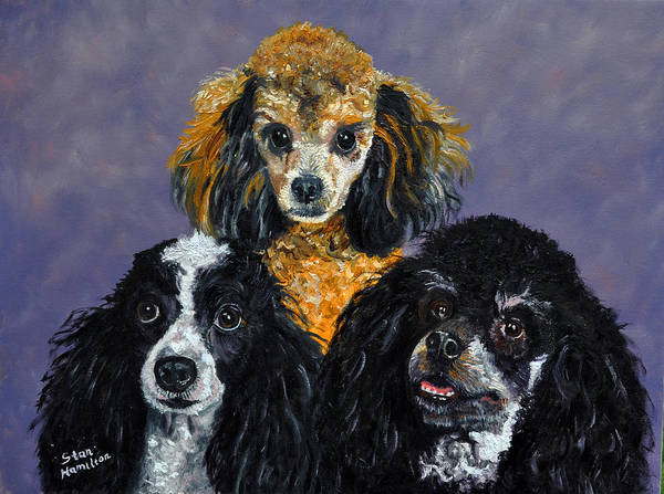 Poodles Poster featuring the painting Poodles by Stan Hamilton
