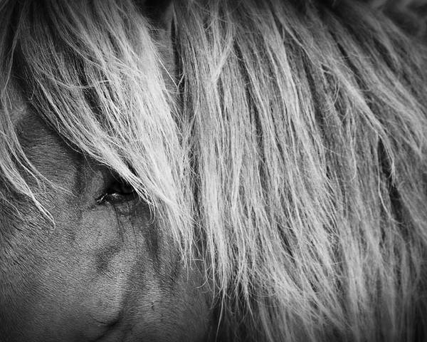 Wild Poster featuring the photograph Portrait Of A Wild Horse by Bob Decker