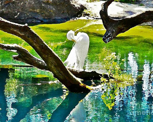 Egret Poster featuring the photograph Preening Watercolor by Carol Bradley