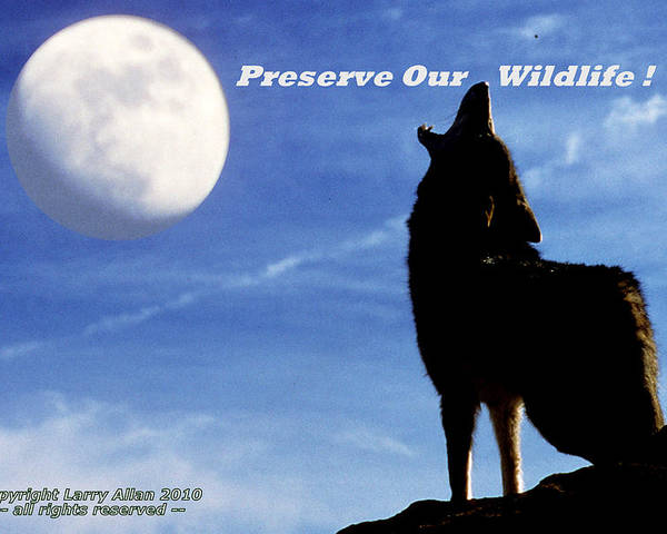 Coyote Poster featuring the photograph Preserve Our Wildlife by Larry Allan