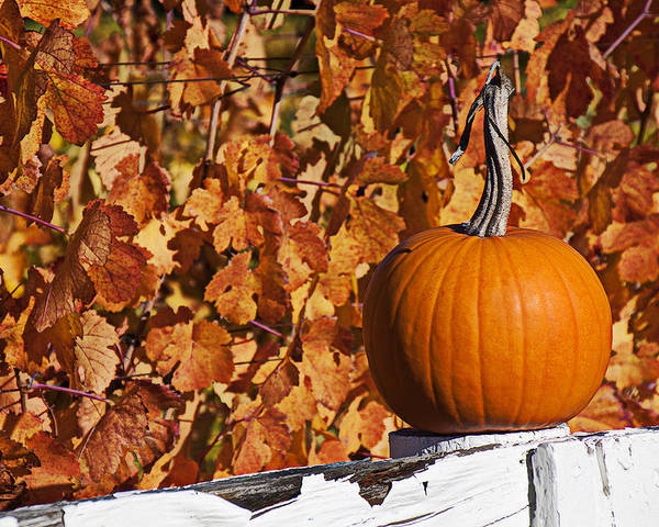 Fence Poster featuring the photograph Pumpkin On White Fence Post by Garry Gay