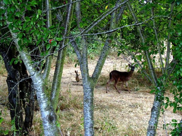 Rabbit Spying On Velvet Buck Poster featuring the photograph Rabbit Spying On Buck In Velvet by The Kepharts