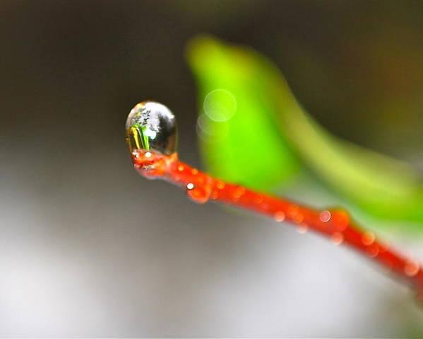 Rain Drop Poster featuring the photograph rain drops Tiny Wonder by Gloria Warren