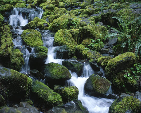 Rainforest Poster featuring the photograph Rain Forest Stream by Sandra Bronstein