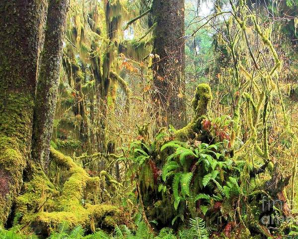 Hoh Rainforest Poster featuring the photograph Rainforest Salad Bar by Adam Jewell