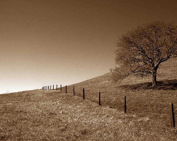 Trees Poster featuring the photograph Ranch Road Oak by Kathy Yates