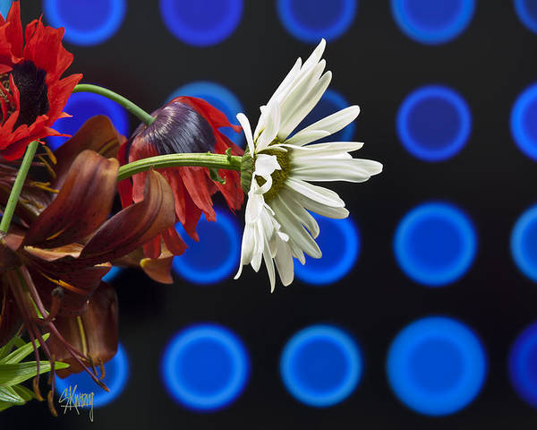 Daisies Poster featuring the photograph Reaching Out by Stan Kwong