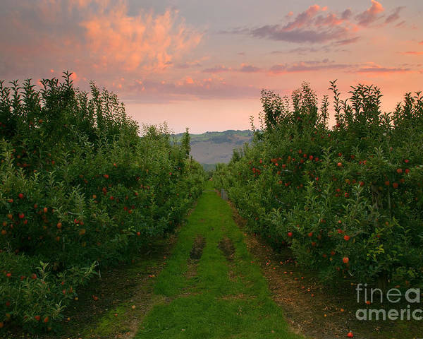 Apple Poster featuring the photograph Red Apple Sunset by Mike Dawson