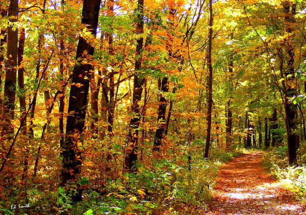 Red Run Trail Poster featuring the photograph Red Run Trail by Ed Smith