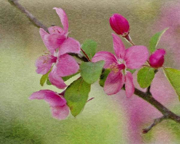 Spring Poster featuring the painting Redbud Branch by Jeffrey Kolker