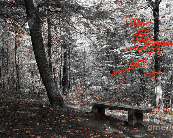 forest Canvas Prints Poster featuring the photograph Reds In The Woods by Aimelle