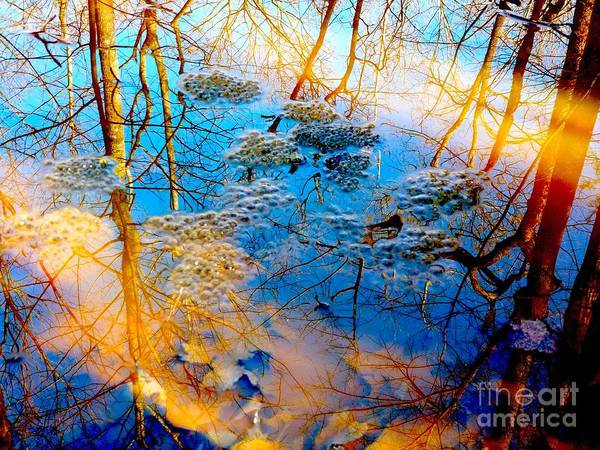 Trees Poster featuring the digital art Reflection by Kathryn Strong