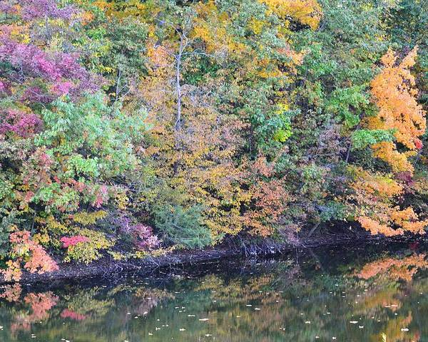 Fall Poster featuring the photograph Reflections Of A Tapestry 2 by Kim Hymes