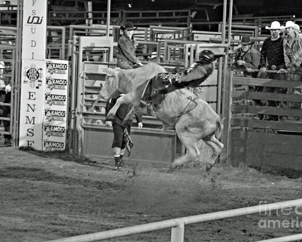 Bull Riding Poster featuring the photograph Ride 'em Cowboy by Shawn Naranjo