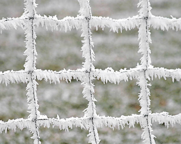 Frost Poster featuring the photograph Rime Covered Fence by Christine Till