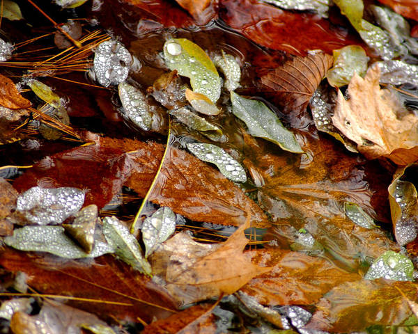 Usa Poster featuring the photograph River Leaves by LeeAnn McLaneGoetz McLaneGoetzStudioLLCcom