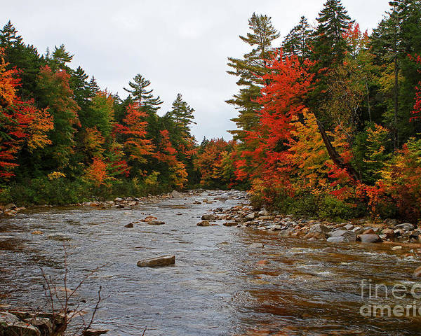 Fall Poster featuring the photograph Rivers Run Through It..fall Brilliance by Lloyd Alexander