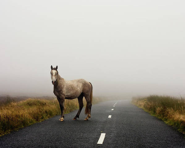 Horizontal Poster featuring the photograph Road by Deirdre Marie Photography
