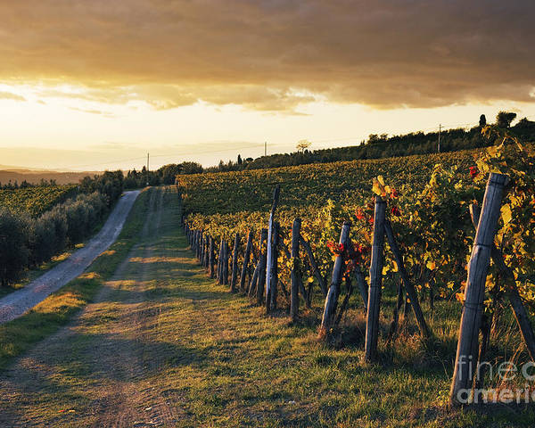 Alcohol Poster featuring the photograph Road Through Vineyard by Jeremy Woodhouse
