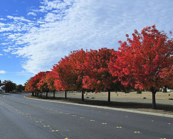 Fall Poster featuring the photograph Road To Fall Colors by Richard Leon