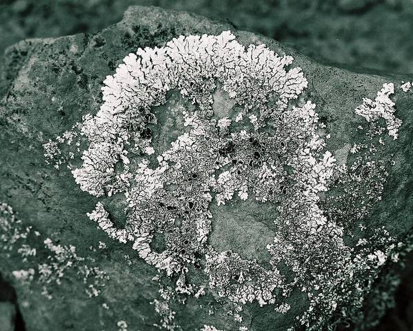 Lichen Poster featuring the photograph Rockin' Skull by