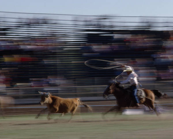 Day Poster featuring the photograph Rodeo Cowboy Trying To Lasso A Running by Chris Johns