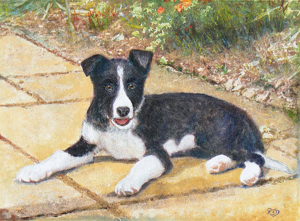 Dog Poster featuring the painting Rory Border Collie Puppy by Richard James Digance