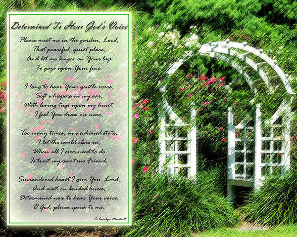 Rose Poster featuring the photograph Rose Garden by Carolyn Marshall