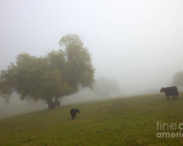 Fog Poster featuring the photograph Rural Fog by Mike Dawson