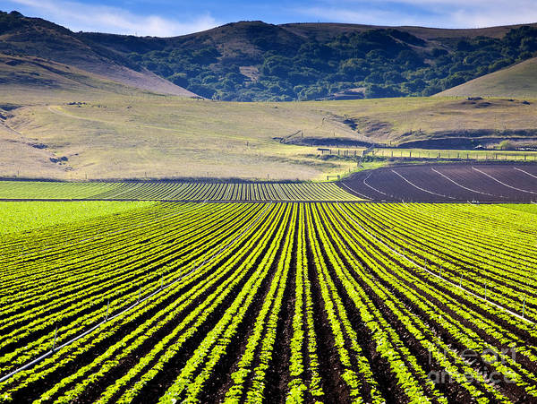 Agriculture Poster featuring the photograph Rural Landscape With Planted Crops by David Buffington