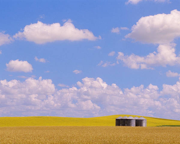 Agriculture Poster featuring the photograph Rye, Canola And Grainery, Bruxelles by Mike Grandmailson