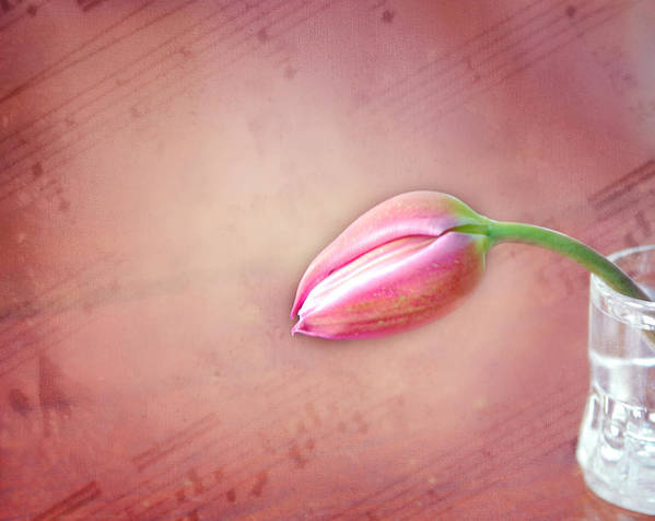Tulip. Vase Poster featuring the photograph Sad Song by Mary Timman