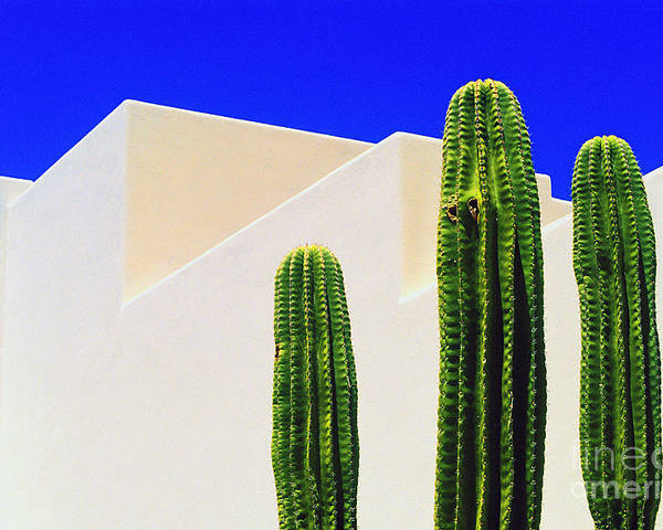 Cactus Poster featuring the photograph Saguaros by Gib Martinez