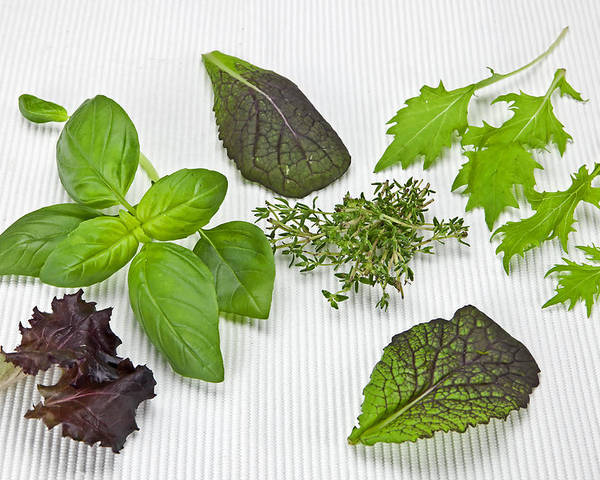Basil Poster featuring the photograph Salad Greens And Spices by Joana Kruse