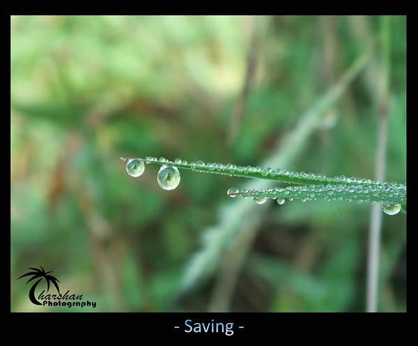 Nature Poster featuring the photograph Savin G by Tharsan Sriranganathan
