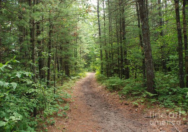 Huron National Forest Poster featuring the photograph Scenic Walk by Grace Grogan