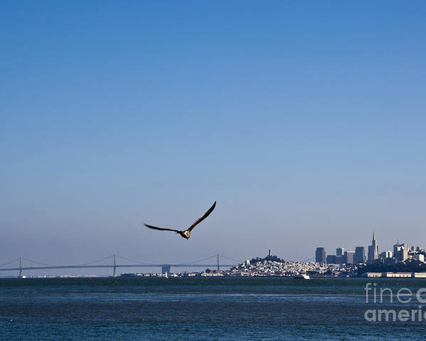 1 Poster featuring the photograph Seagull Flying Over San Francisco Bay by David Buffington