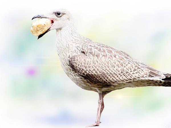 Seagull Poster featuring the digital art Seagull Steeling Food by Yvon van der Wijk