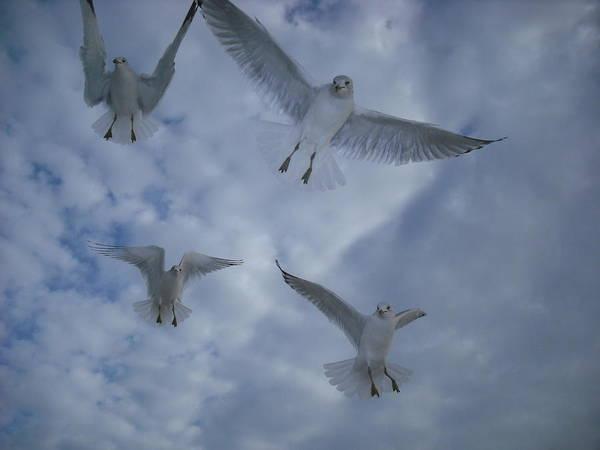 Seagulls Poster featuring the photograph Seagulls by Jennifer Eddiba