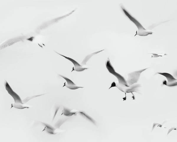 Horizontal Poster featuring the photograph Seagulls by K.Arran - photomuso