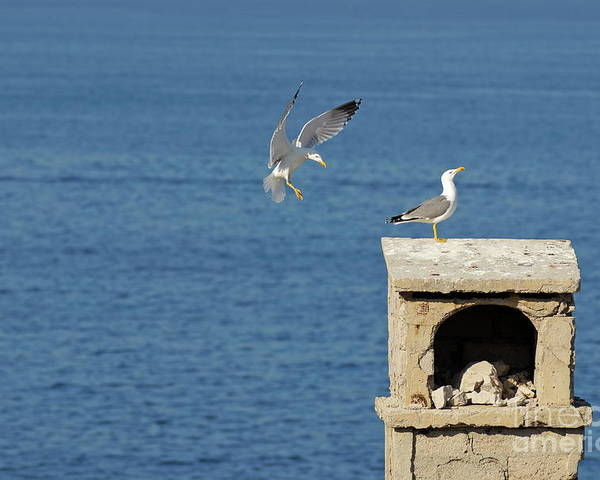 Freedom Poster featuring the photograph Seagulls Landing On Wall Overlooking Sea by Sami Sarkis