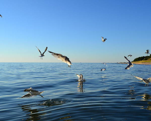 Lake Michigan Poster featuring the photograph Seagulls Over Lake Michigan by Michelle Calkins