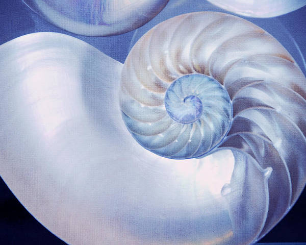 Seashell Poster featuring the photograph Seashell. Blue Version by Jenny Rainbow